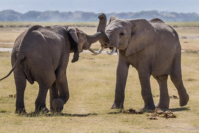 Amboseli National Park Guided Full Day Tour photo 12