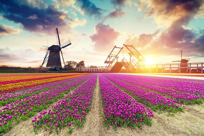 Dutch Countryside and Tulip Fields Tour