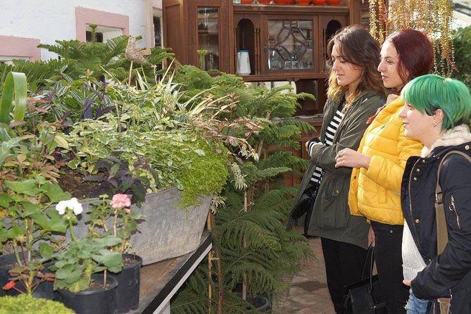 Tour to Gardenia Shevardnadze Flea Market and Tbilisi Old Town