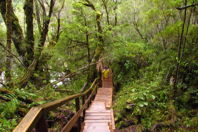 Puerto Varas: Full day Alerce Andino National Park, include box lunch & entrace