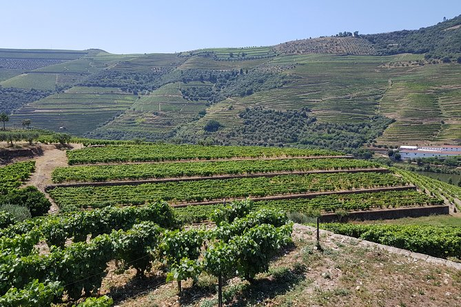 Private tour to Douro Valley from 1 to 4 passengers