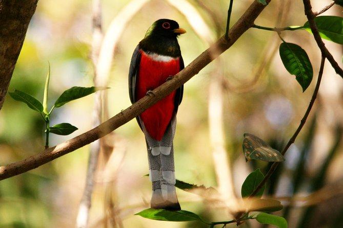 Bird Watching Ecotours in Puerto Vallarta