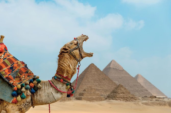 8 Hrs Day Tour of Giza Pyramids-Egyptian Museum with Market and Camel ride photo 25