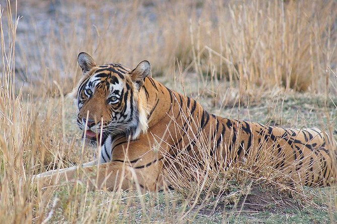 3N/4D Safari Tour in Ranthambore Tiger Reserve with a Video Reel (All-Inclusive)