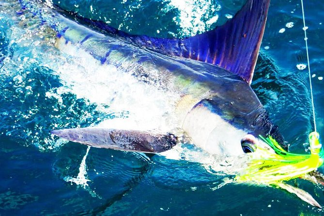 Sea Mountain Experience - Sport Fishing Private Charter 3-5 days photo 1