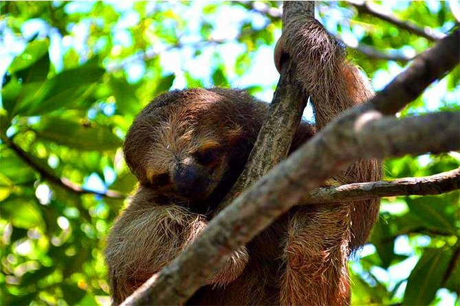 Roatan Sloths Encounters, City Tour and Transfer