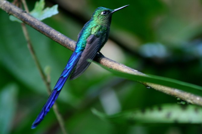 Private Full-Day Mindo Cloud Forest, Butterfly Farm, and Chocolate Tour from Quito