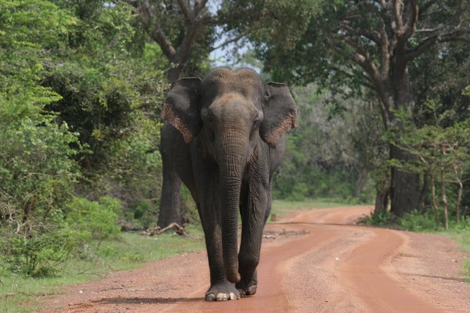 Evening Safari - Yala National Park with Janaka safari - 02.00 pm to 06.30 pm