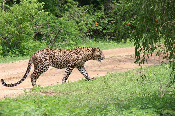 Full day Safari - Yala National Park - 04.30 am to 06.00 pm with - Janaka safari