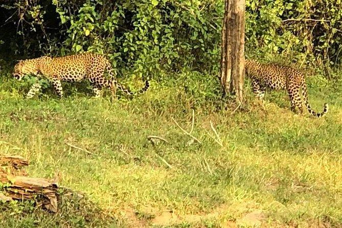 - Parque Nacional Yala, SRI LANKA