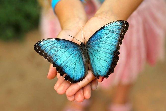 Eintrittskarte für den Schmetterlingspark von Benalmadena