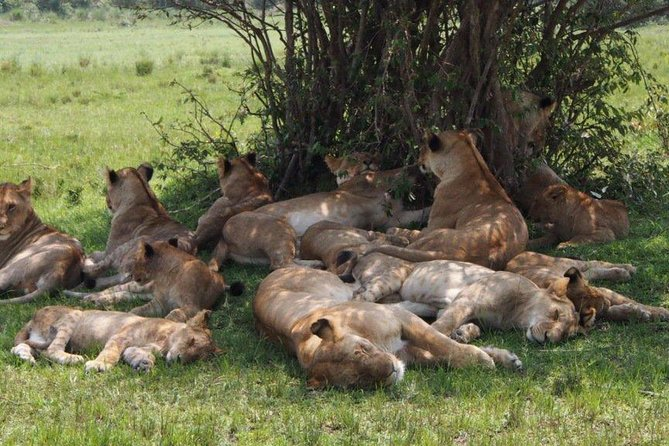 Masai Mara Budget Camping Safari Tours 4 Days