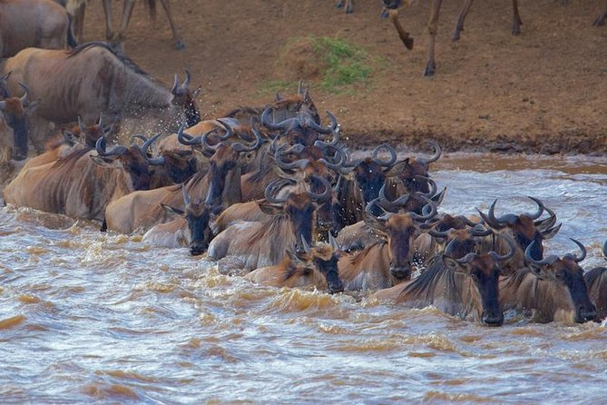 3 Days Maasai Mara Safari From Nairobi