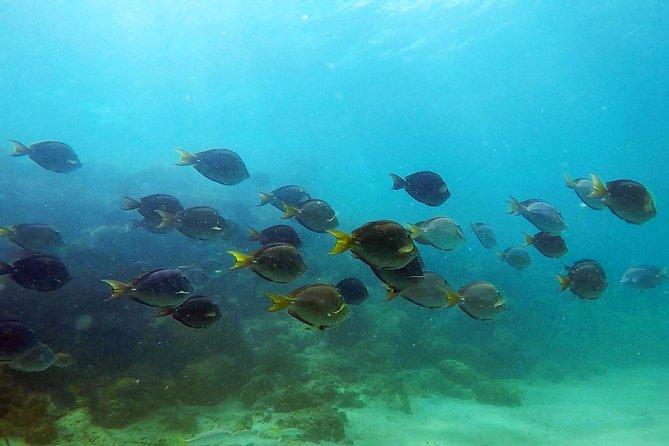 San Juan Guided Snorkel Tour