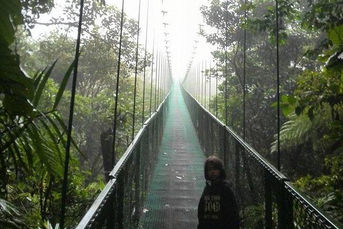Treetop Hanging Bridges Tour through the Cloud Forest