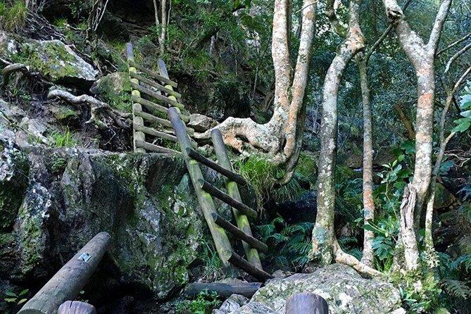 Skeleton Gorge Hike for Morning
