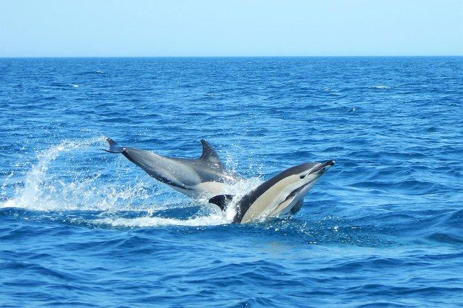 Dolphin Watching in Lovina