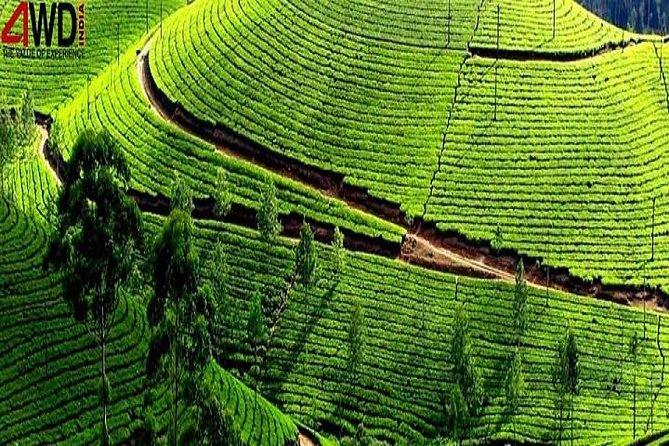 A Blissful Week in Kerala Tour