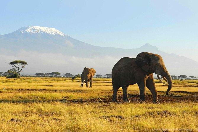 10 DAYS SAFARI (Kilimanjaro,Arusha,Tarangire,Serengeti,Ngorongoro crater)