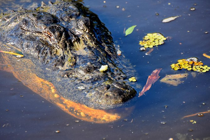 New Orleans Ghost and Gators Combo Tour