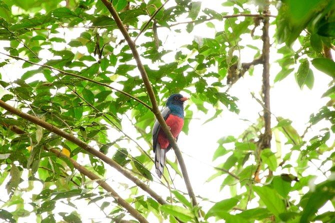 Bird-Watching Tour from San Jose