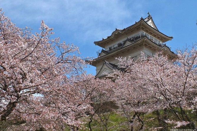 Cherry Blossom på Odawara Castle, Lake Kawaguchi & Pirate Ship Ride!
