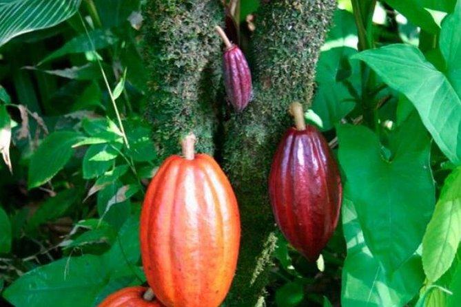 BriBri Chocolate Tour and Cahuita National Park