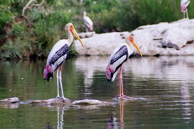 Excursion to Surwal Lake With Transfers & Guided Trip