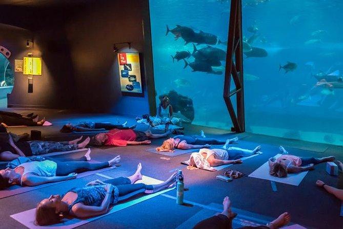 Aquari-OM-Yoga onder haaien, roggen en vissen in Maui Ocean Center