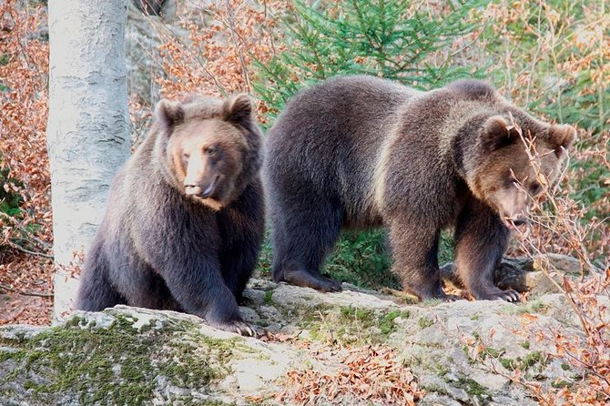 Bearwatching Hiking Day Tour in High Tatras from Poprad