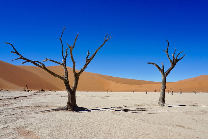 11-Day Cape Desert Safari Adventure Accommodated Tour from Cape Town