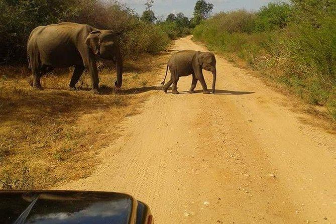 Udawalawa Safari from Colombo or Negombo