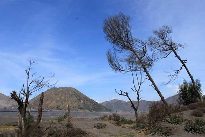 Bromo panorama tour to avoid the crowds - start Malang // 1 day tour