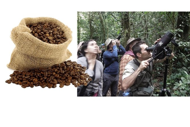 Avoid crowds! Morning coffee tour, Lunch, Afternoon cloud forest COMBO.