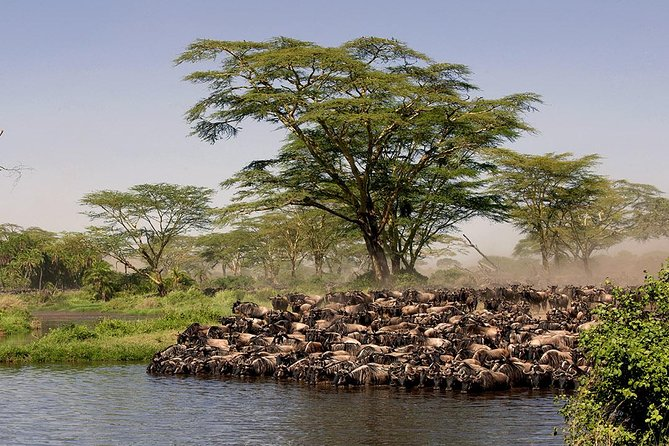 9 Days Safari (northern Tanzania Include Walking) photo 4