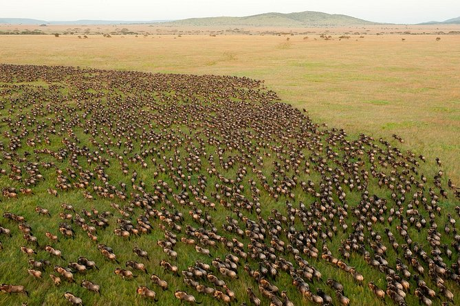 Ten Days Safari Program
