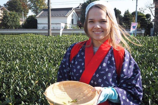 Experience Seasonal Green Tea Picking in Sayama and Nostalgic Walk in Kawagoe!