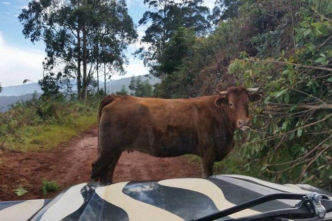 4x4 Jeep Safari - Surrounding Far West (Full Day)