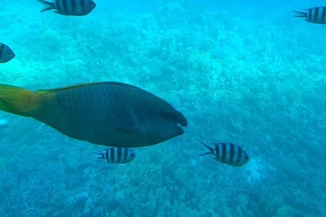 Trip on a glass bottom boat from Hurghada