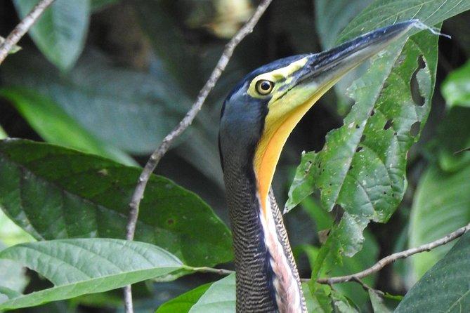 , , COSTA RICA