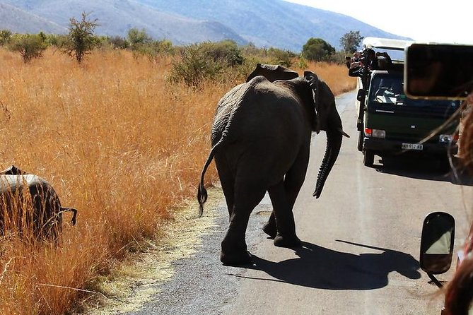 6 hours Open Vehicle Safari in Pilanesberg National Park with Lunch