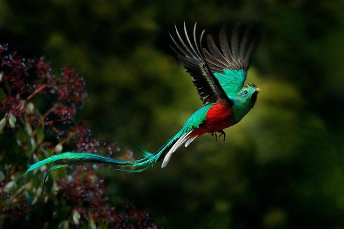 Quetzales and more Bird Watching tour with pick up from San Jose