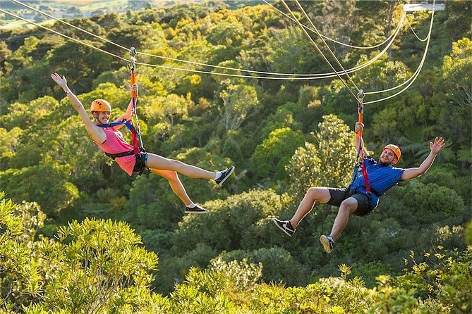 The Best of Waiheke: Ziplining, Wine Tasting and Vineyard Lunch Image
