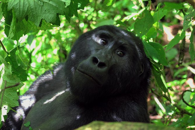 04 days Gorilla Trekking Safari