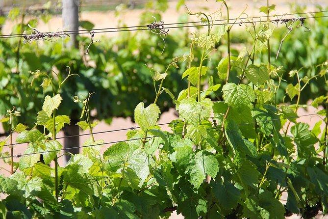Tour Etna & Wine Tasting