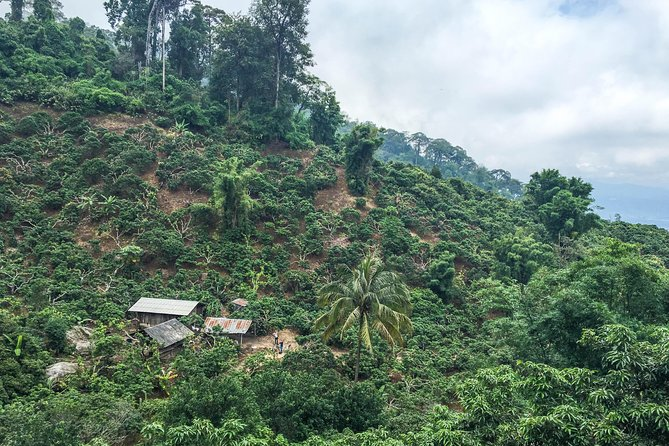 6-Hour Hike and Bike in Doi Suthep Pui National Park Combo from Chiang Mai photo 7