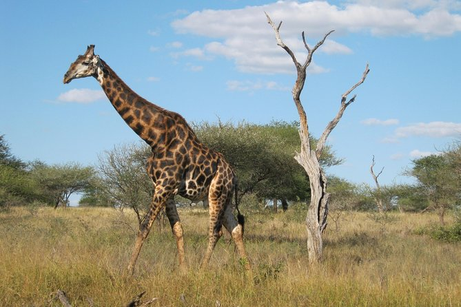 3 day Kruger Park Safari