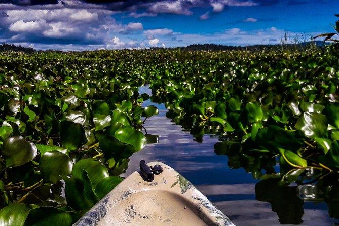 The Magic Hidden Lagoon - A Wildlife Heaven Never Visitied by Tourist Before, Puerto Jimenez, COSTA RICA