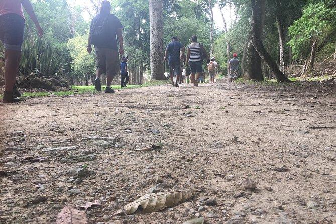 Crocodile Eco-Sanctuary & Rum Factory Tour