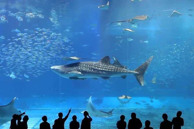 Okinawa Churaumi Aquarium Ticket (Redeemption Required)